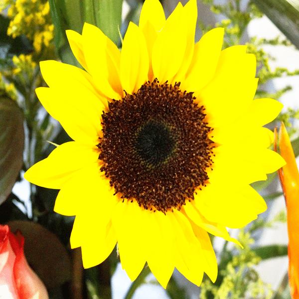 Contrariedades de lilis, girasoles y rosas para Arreglos florales Tijuana - Florerias en Tijuana