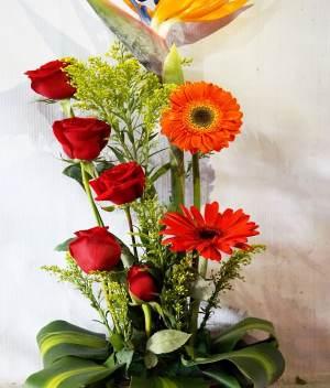 Arreglo de flores con rosas y gerberas | Florerías en Tijuana | Envio de flores a domicilio Pachuca