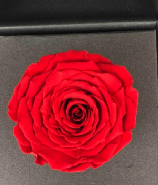 abrázame, rosa eterna, florerías en tijuana