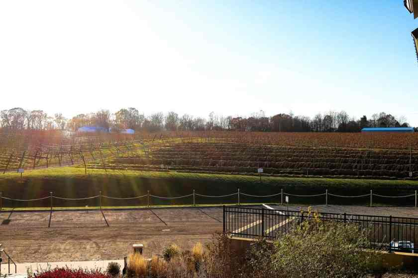 Vineyard at Dablon