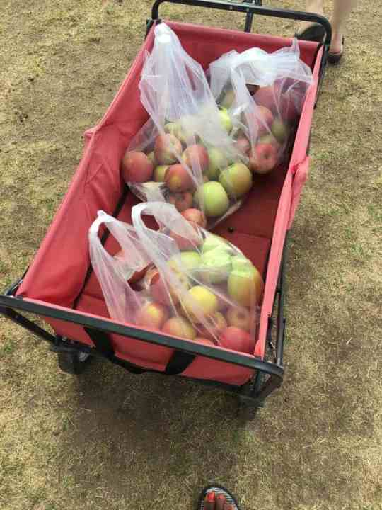 Red wagon filled with apples at Crane U-Pick Orchards