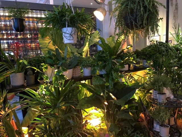 Greenhouse set up in lobby at Kimpton Gray Hotel in Chicago