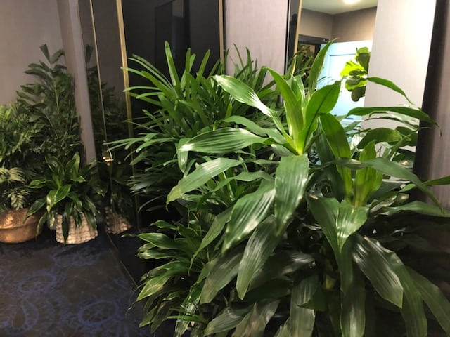 Room of foliage at Plant Hotel Pop-Up at Kimpton Gray Hotel
