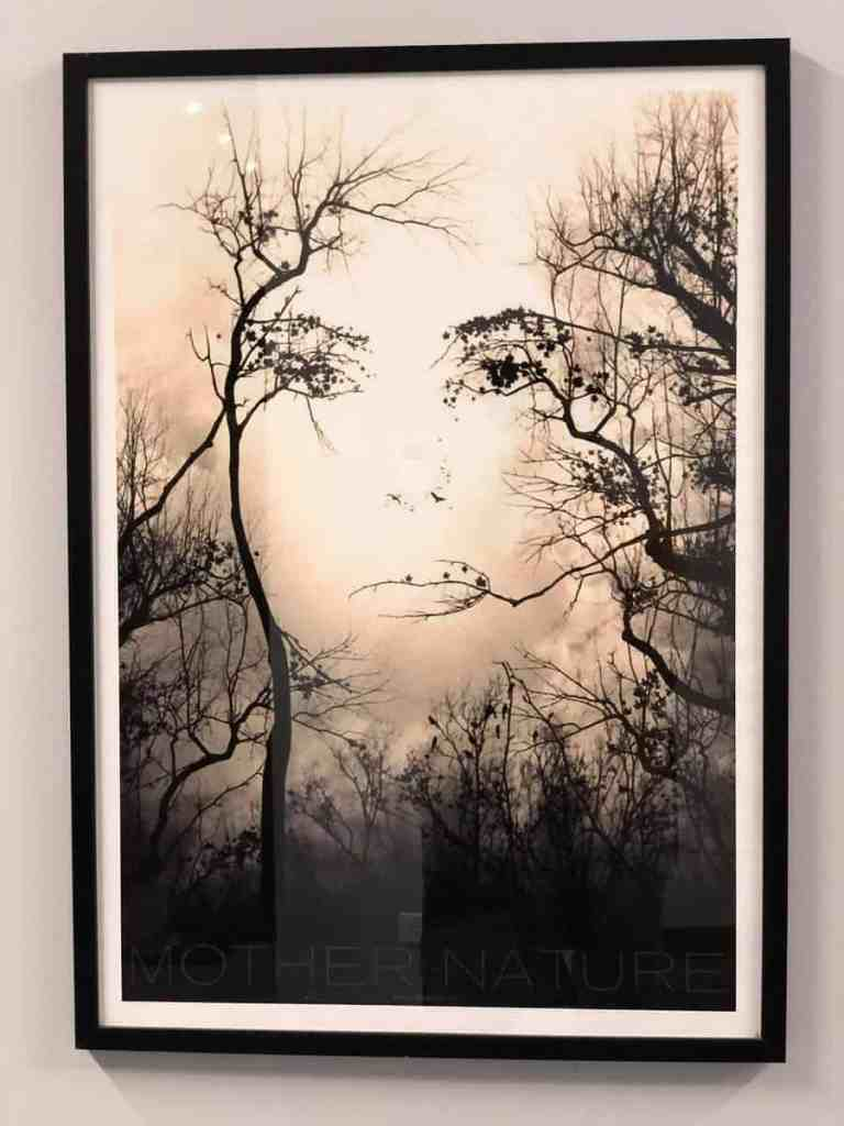 Illusion photo of a woman made out of tree limbs