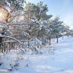 Tuesday Tales: Writing Fierce Snow