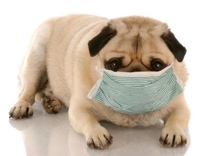 Hygiëne bij hondenvoeding