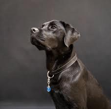 Hond uitlaten in het donker