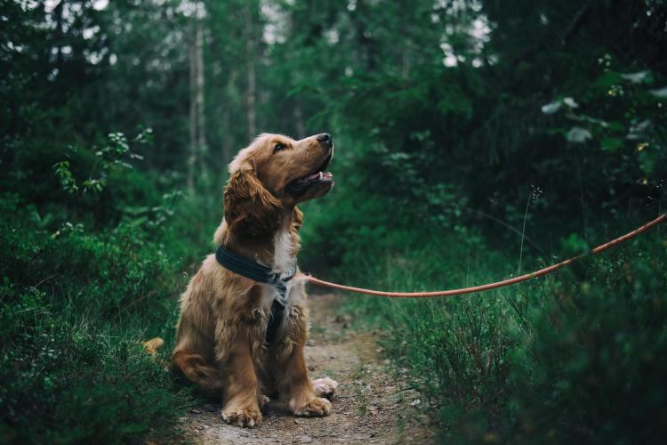Een hondenriem of rollijn; wat is het beste voor de hond?