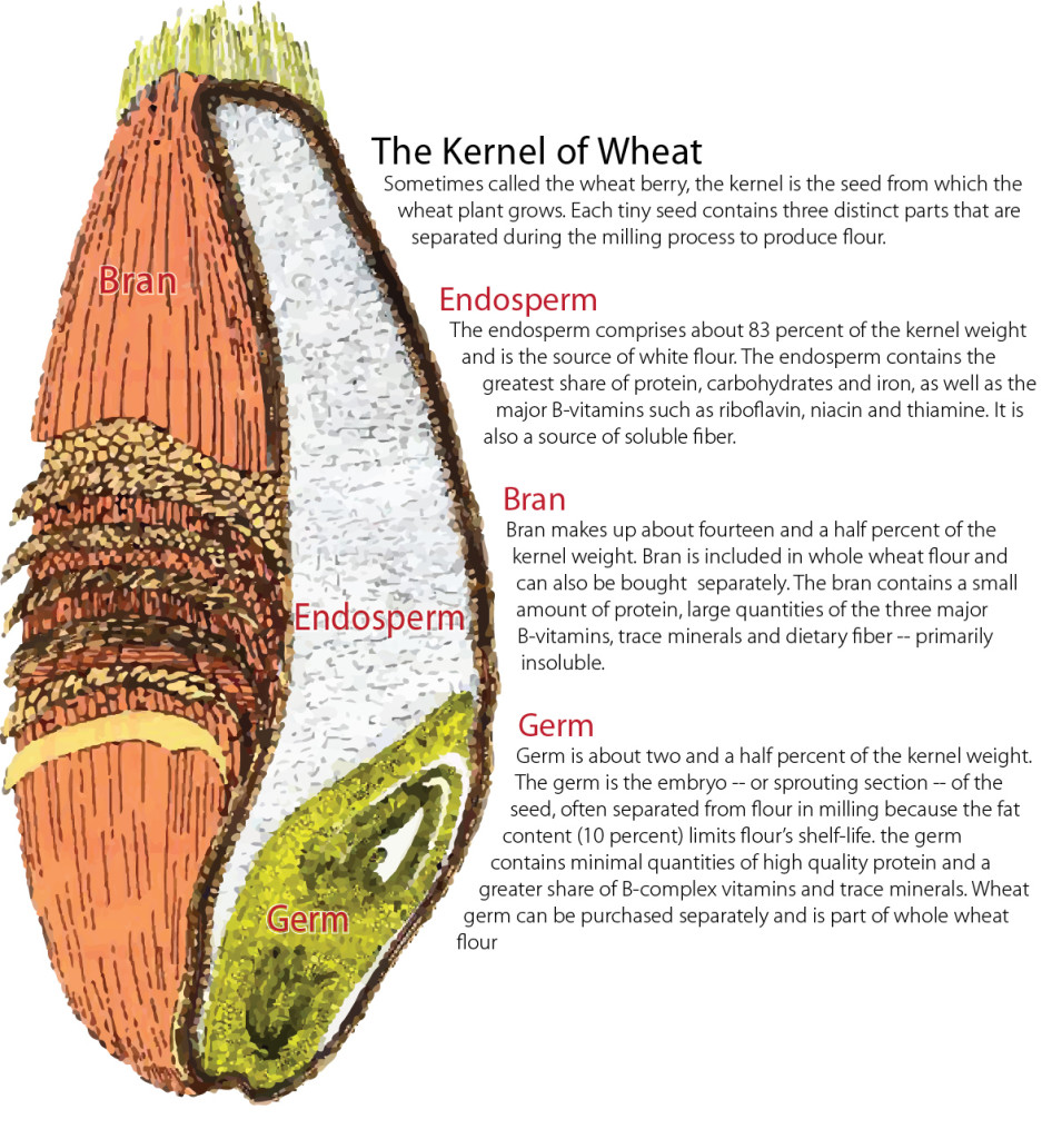 hight resolution of anatomy of a wheat kernel whole wheat flour whole wheat grain diagram