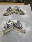 Butterfly Breads