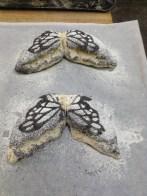 Butterfly Breads