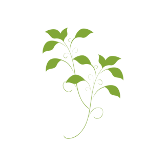Organic Moringa Powders