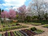 Dream vegetable garden