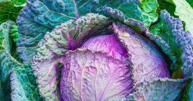 cabbage, зеле
