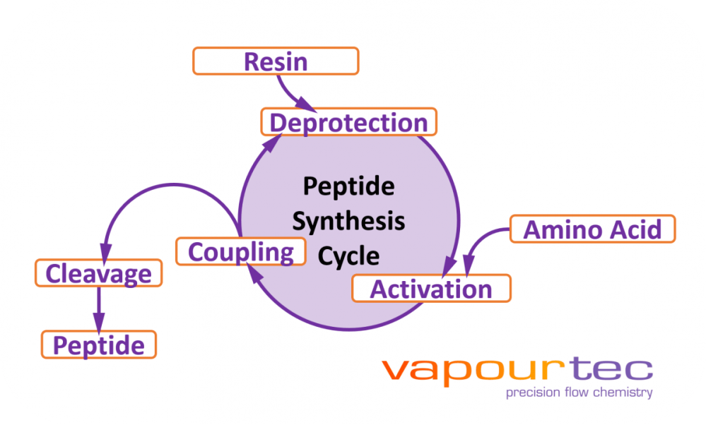 medium resolution of in early 2017 i spent two weeks working off site with a collaborator new path molecular research helping to develop what would become vapourtec s peptide
