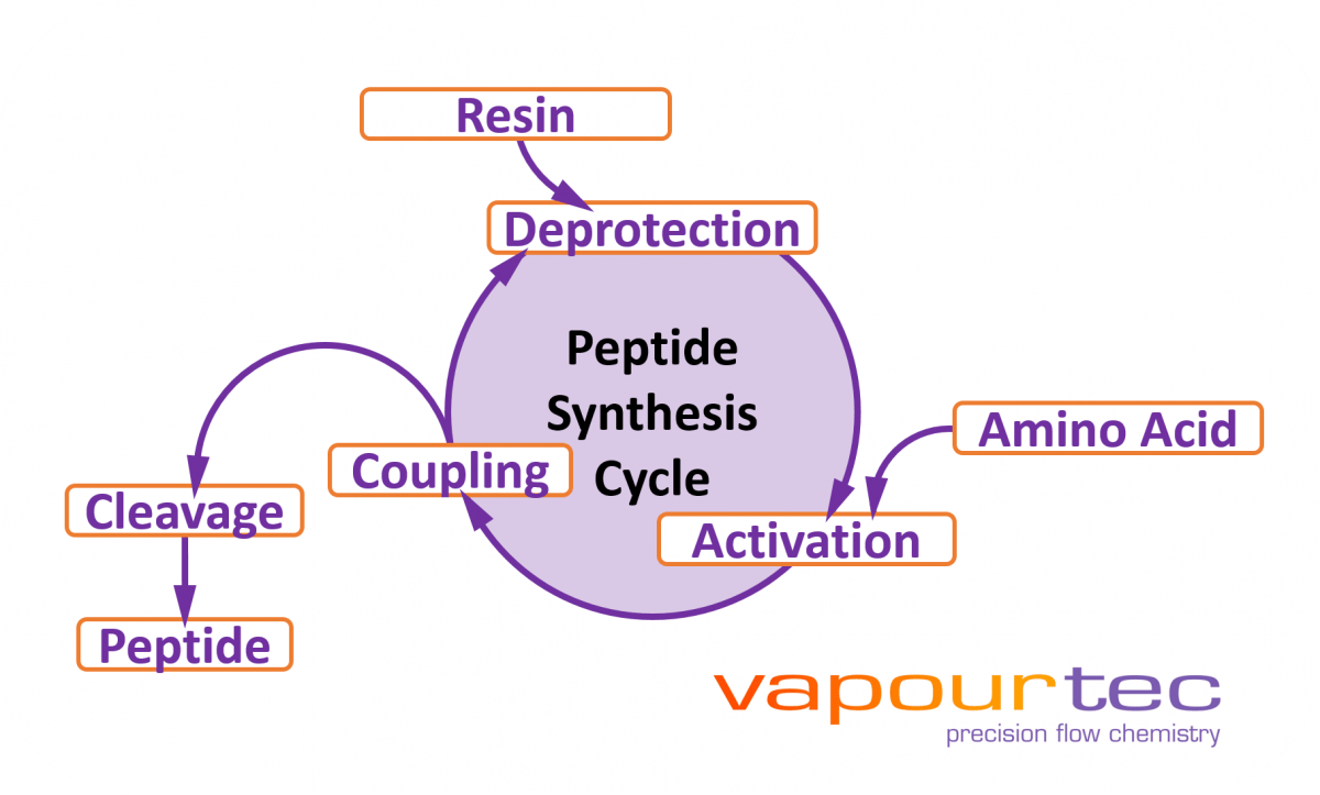 hight resolution of in early 2017 i spent two weeks working off site with a collaborator new path molecular research helping to develop what would become vapourtec s peptide