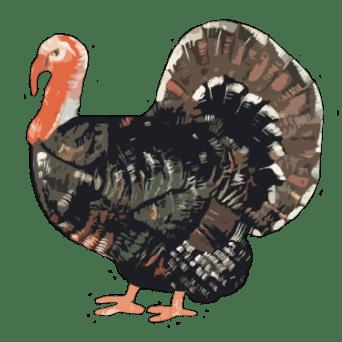 Turkey Crown (Bronze)