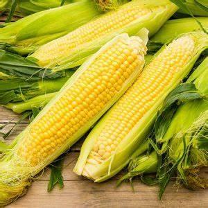 Corn on the Cob (3)