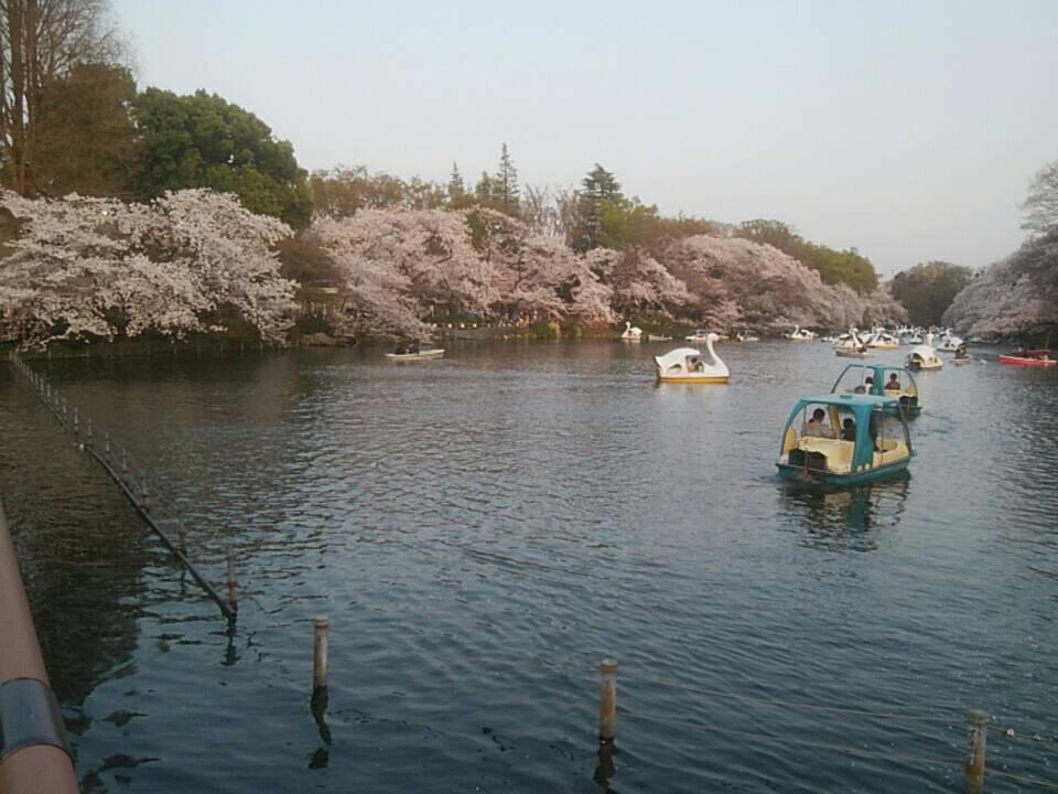 S 7704977252420 - 桜の季節🌸