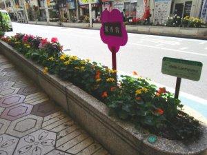 IMG 5340 300x225 - 第44回花壇コンクール・フラワーまつり