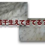 育毛剤塗布後 2015-01-21
