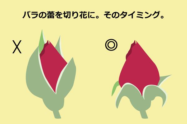 切り花の蕾が咲かない