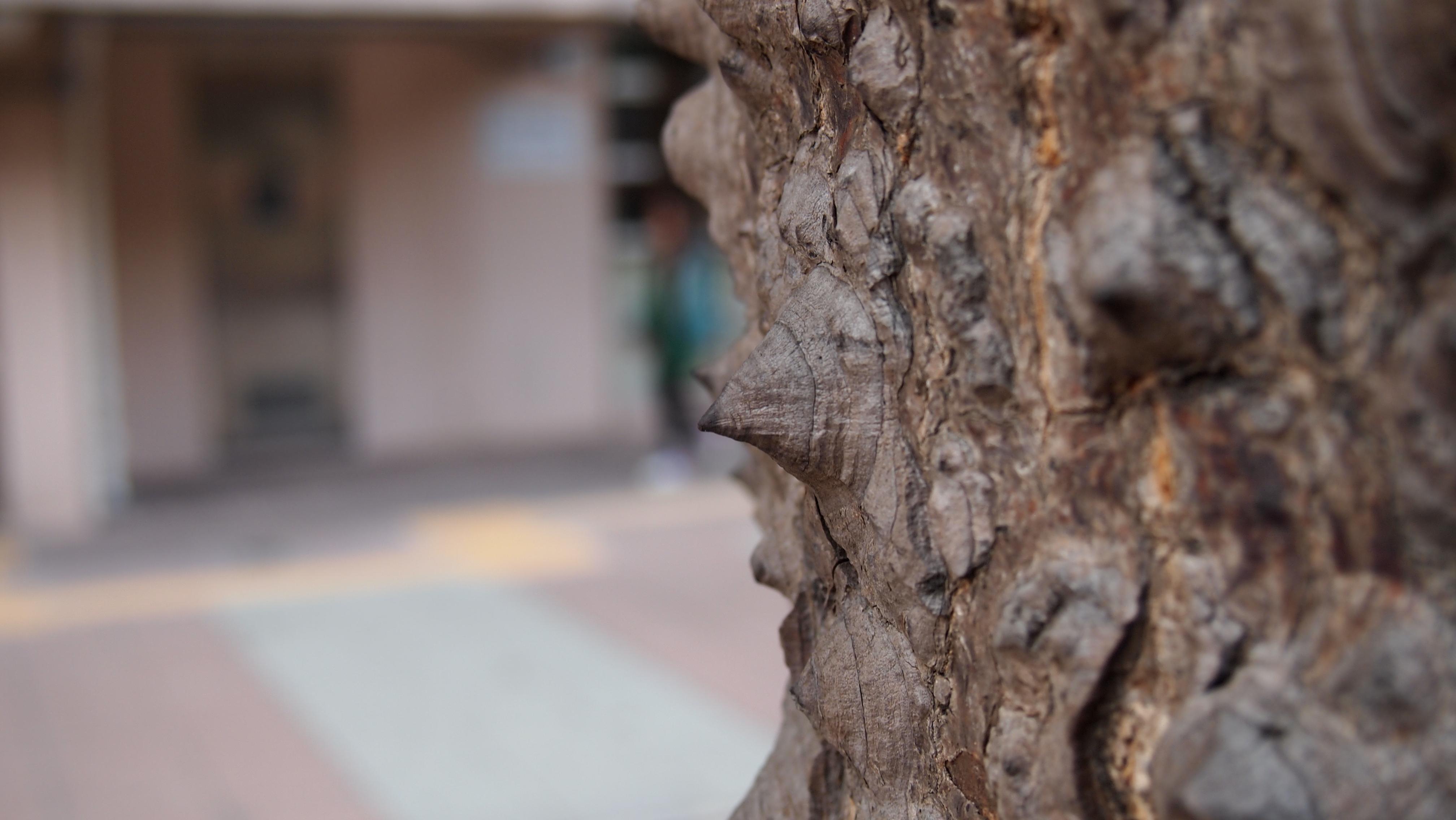 早春的英雄木︰木棉 | 拈花 ‧ 惹草