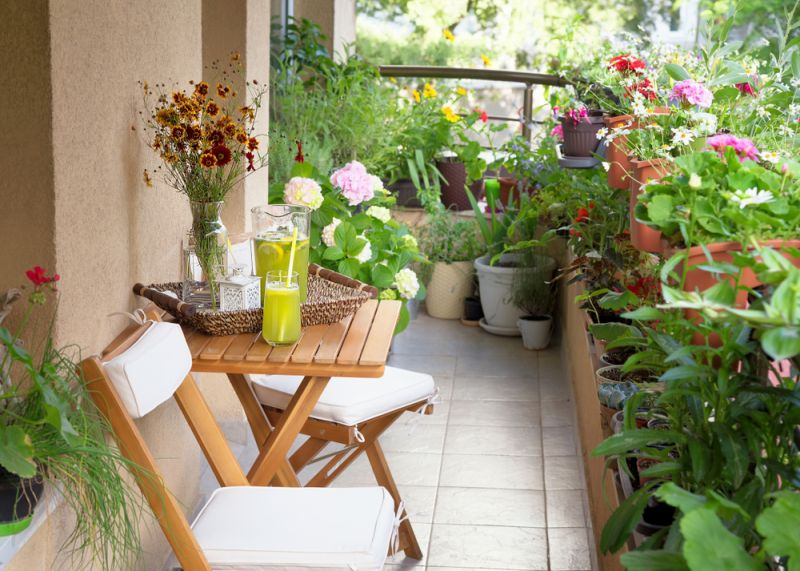 10 Low Maintenance Plants For A Picturesque Balcony