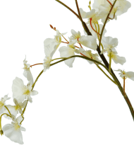 Orchid-Oncydium-white_detail-1