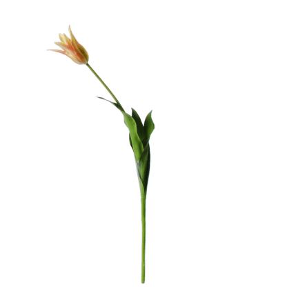 Tulip-on-a-stem-orange-64cm