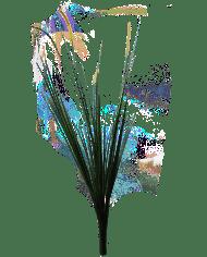 Palm-grass
