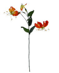 Flowerdutchess-gloriosa-orange
