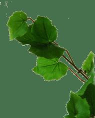 Flowerdutchess-birch-branch-90cm-3