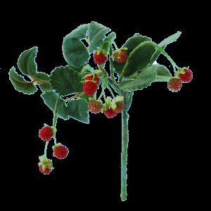 FlowerDtuchess | Wilde aarbeitjes | 29 cm