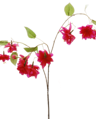 FlowerDutchess-Fuchsia-detail-2