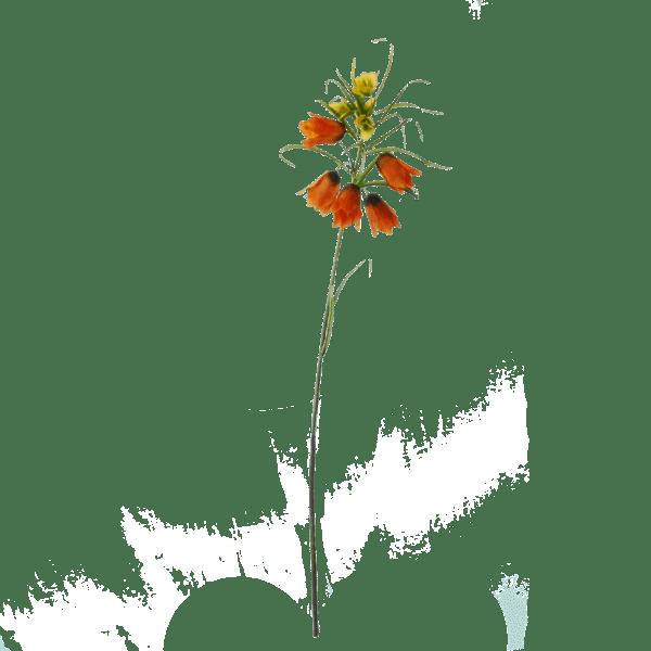 FlowerDutchess-keizerskroon