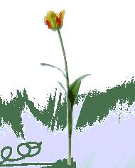 FlowerDutchess-Parkiet-tulp-groen-geel-2