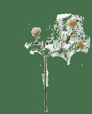 FlowerDutchess-rozentak-creme-3