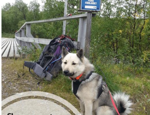 hunden bobo på vandring