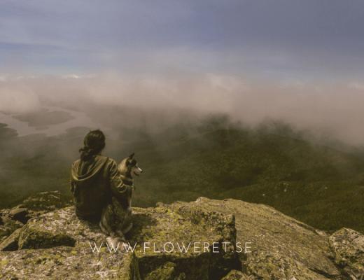 tankar på berg med en hund