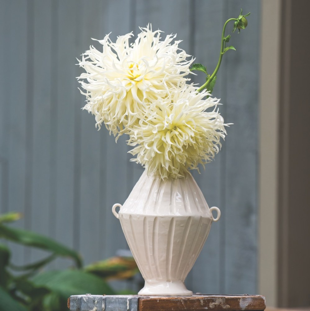 frances palmer ceramics, dahlia garden