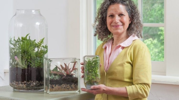 terrarium care tips