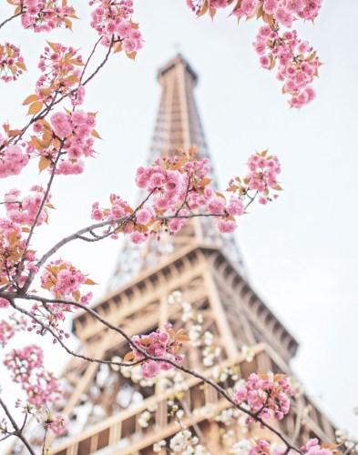paris in bloom eiffel tower