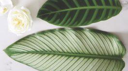 preparing tropical leaves for arrangements