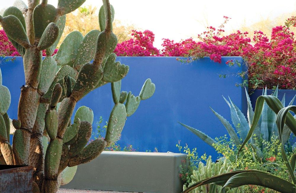 Steve Martino, desert gardens