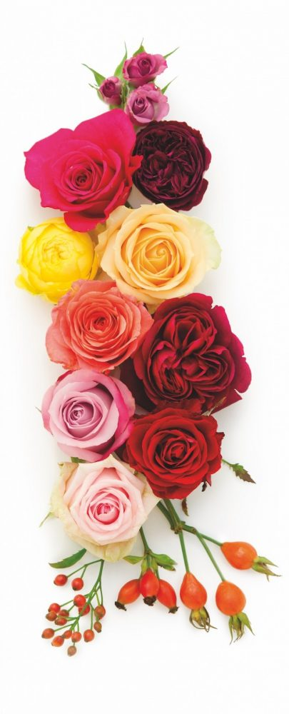 roses for weddings