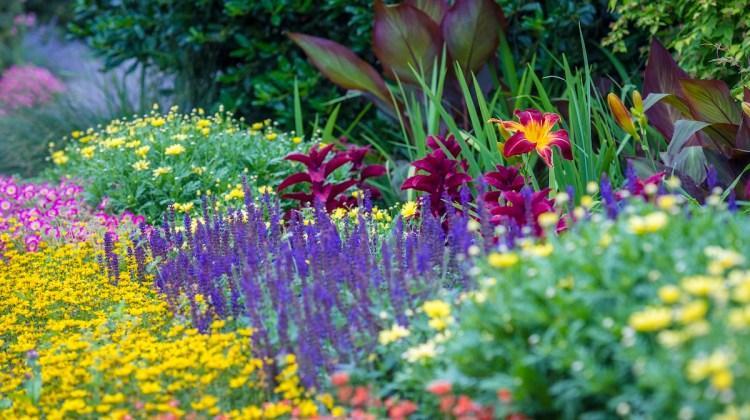 salvia varieties, salvia flowers