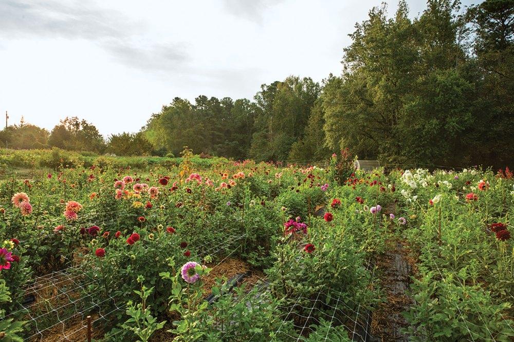 Moonflower, 3 Porch Farm