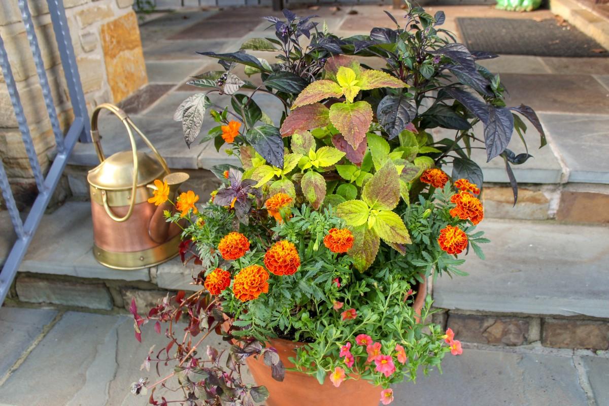 Fall Color Container Garden