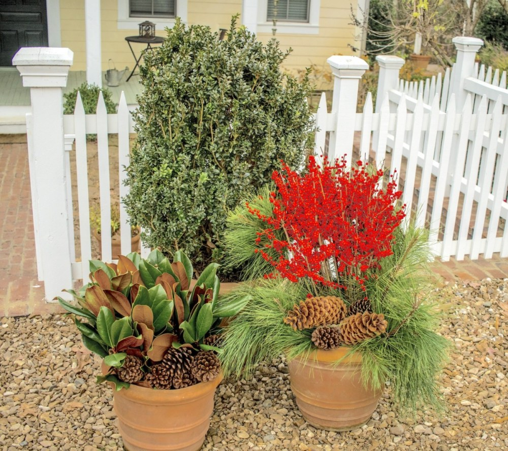 easy evergreen containers